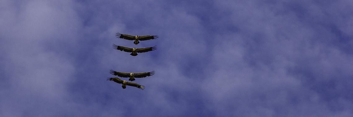 лешояд в полет